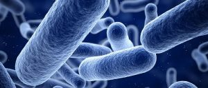 Case Western Reserve researchers cure drug-resistant infections without antibiotics
